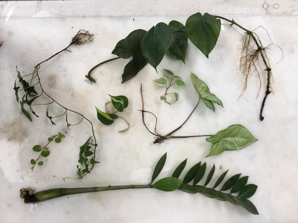 Primeira  Troca de Mudas do Jardineiro Fiel